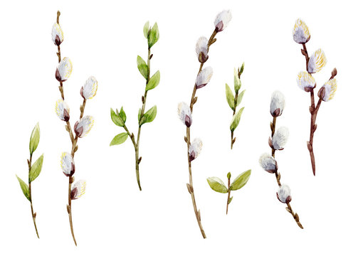 Watercolor willow tree set
