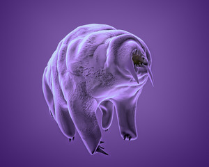 The water bear (tardigrade), the most extreme animal on our planet, 3Drendering