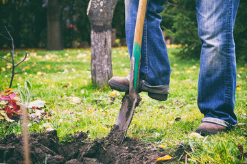 Gardener digging in a garden with a spade. Man using a big shovel for digging old lawn. Soil preparing for planting in spring.