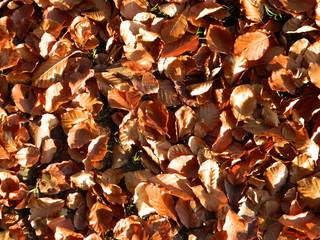 Herbstlaub auf dem Waldboden