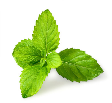 closeup of fresh spearmint leaves isolated on white background