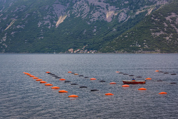 Oysters farm in the Kotor Bay on the Adriatic Sea in Montenegro