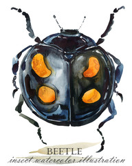 Beetle. Insect watercolor illustration.