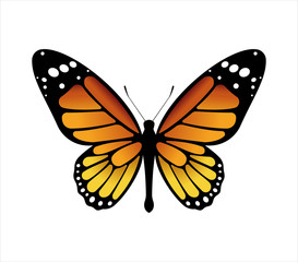 Colorful butterfly . Vector illustration