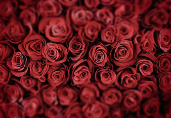 Natural red roses background. shallow depth of field