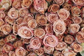 Aerial view of pink roses.