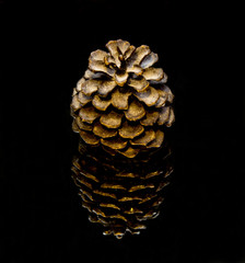 Gold Pine Cone on an Black Background