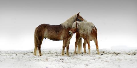 Dwa konie przytulają się na pastwisku