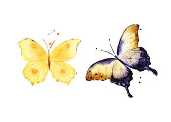 Butterflies. Watercolor animal illustration