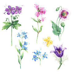 Meadow floral set. Collection with wild flowers, drawing watercolor, Poppy, Anemone, Forget-me-not and Butterfly