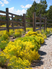 Yellow Fall Wildflowers Against Wooden Post Fence