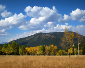 Fall Colors with Blue Skies and Soft Clouds over Colorado Mountains
