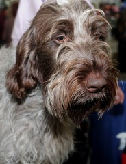 BROWN SPINONE ITALIANO