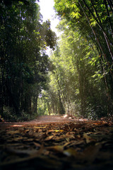 Abstract background of nature trails amidst the bamboo forest. Journey and natural Concept.