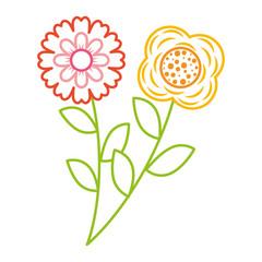 two flowers decorative spring image vector illustration color line design