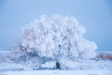 Hoar frost on tree near Flathead Lake