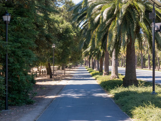 Palm tree lined campus sidewalk at Stanford University