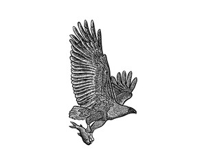 Flying Eagle with Fish on His Paws Illustration Hand Drawing Logo Vector