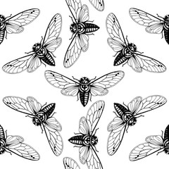 Vector background with hand drawn Cicada sketch. Vintage engraved locust illustration isolated on white. Entomological, seamless insects pattern
