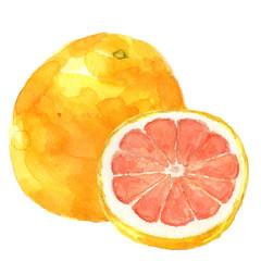ピンクグレープフルーツ 水彩