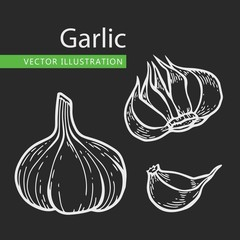 garlic illusrtation set