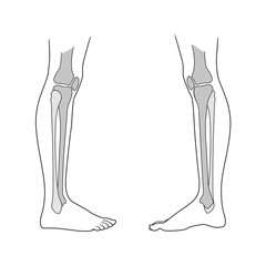 Lower limb of the person including the knee. Type of view and view from the inside. Large and small tibia, meniscus. Vector. Isolated on white background