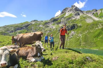 Bergwanderer in idyllischer Gebirgslandschaft mit Kühen