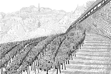 Vineyard landscape with old town in the valley and castle wall. Hand drawn sketch vector illustration or lable on white