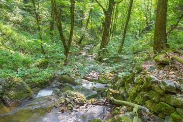 Slovakia - The creek in Zadielska valley in national park Slovensky Kras.