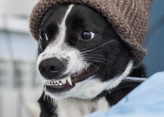 Funny gog smiling