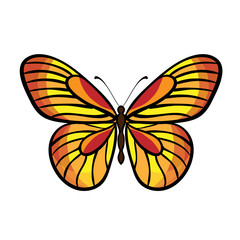Butterfly Vector Isolated