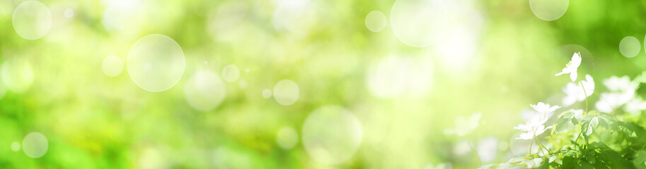 Abstract green spring background