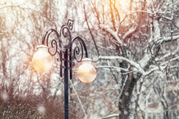 Beautiful winter background with trees cover snow and street light. Snow falls, toned photo, cope space.