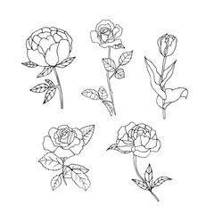 set of hand drawn flowers collection