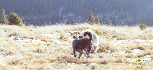 Black dog playing, dog on a forest walk