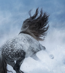 Fototapete - Grey Purebred Spanish horse galloping during snowstorm.