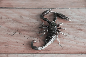black scorpion on grunge wooden