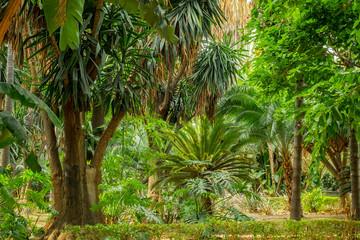 tropical garden scene