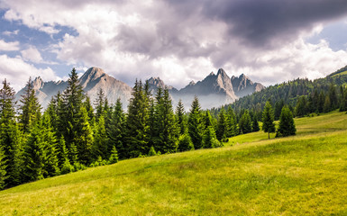 spruce forest on grassy slope. composite landscape with High Tatra mountains in the distance. lovely summer scenery