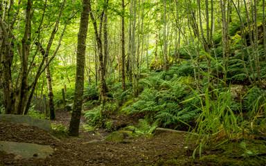 Green forest, Scottish Highlands, UK