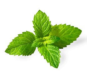 fresh spearmint leaves isolated on the white background