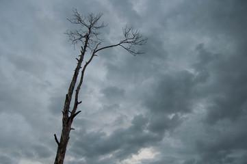 Dry leafless tree against dark stormy sky..