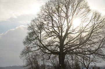 Baum im Winter mit Sonnenstrahlen hinter den Ästen