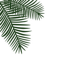 two green palm leaves on the side background vector