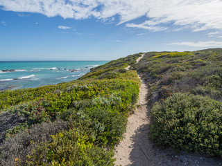 De Hoop Nature Reserve - Walking path leading through the sand dunes at the ocean with coastal vegetation