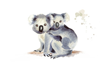 Koala bear with baby sitting on a tree branch, isolated on white background. Watercolor hand drawn illustration