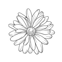 Vector flower in line art style. Isolated on white background.