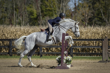 Woman and Grey horse over fences
