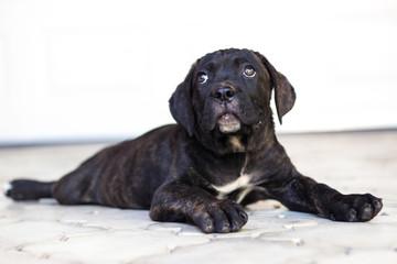 Beloved Puppy