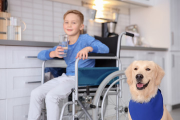 Cute service dog and blurred boy in wheelchair indoors